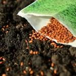 bepflanzen Hochbeet